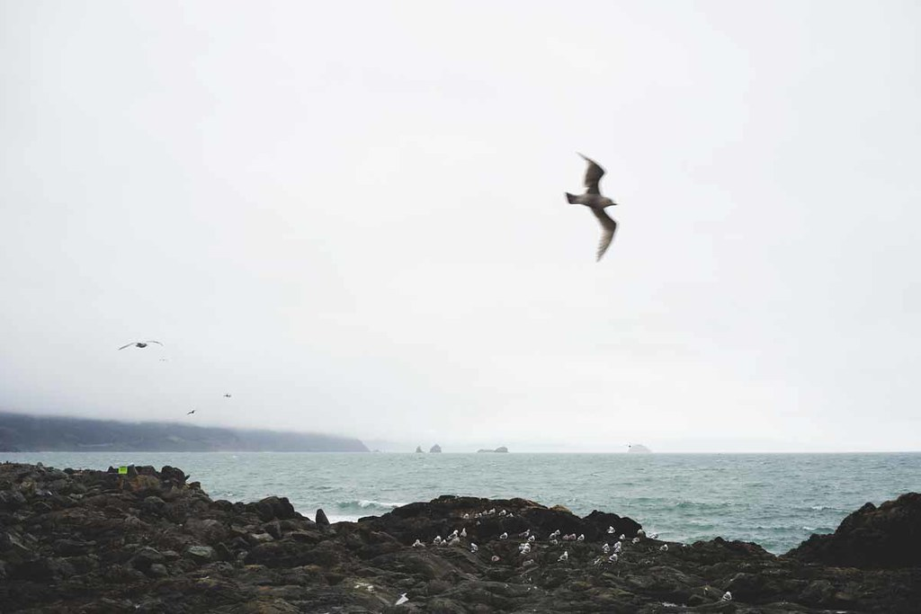 3-seagulls