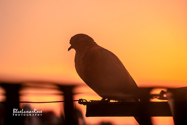 Sunrise & The Daily Visitor