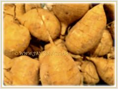 Brassica rapa var. rapifera (Turnip, White Turnip, Turnip Rape) seen in a supermarket, Feb 26 2018
