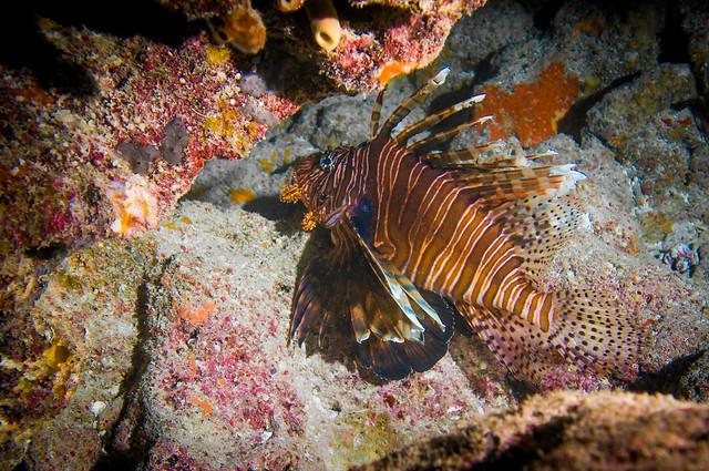 Ultimate Reef Predator