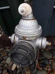 The beach sense of humor, sea shell on top of a silver fire plug, stones, Dash Point, Washington, USA