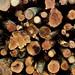 {029:365:2018} Log Pile
