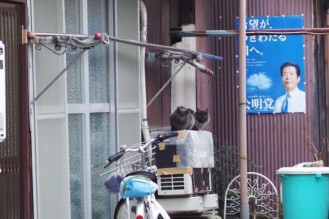 Today's Cat@2018-02-03