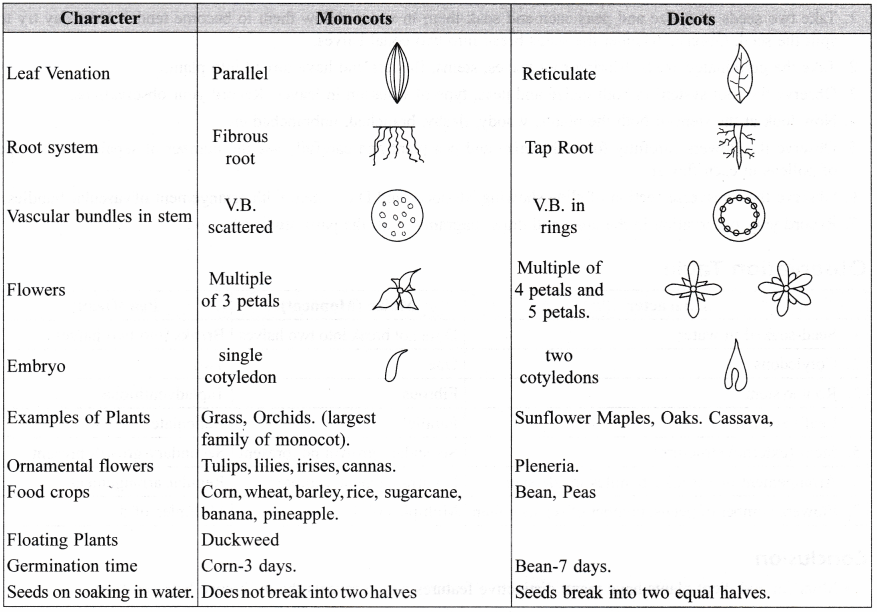 ncert-class-9-science-lab-manual-features-of-monocot-and-dicot-plants-2