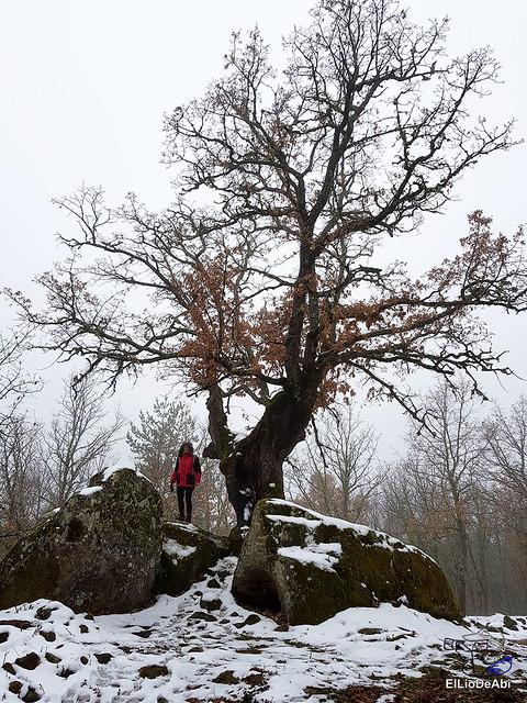 Necrópolis de Revenga y La Cerca con nieve 25
