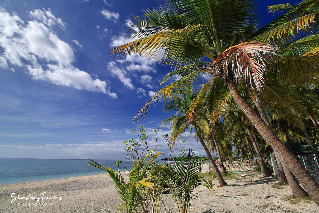 coconut palms at Maniwaya's western beach