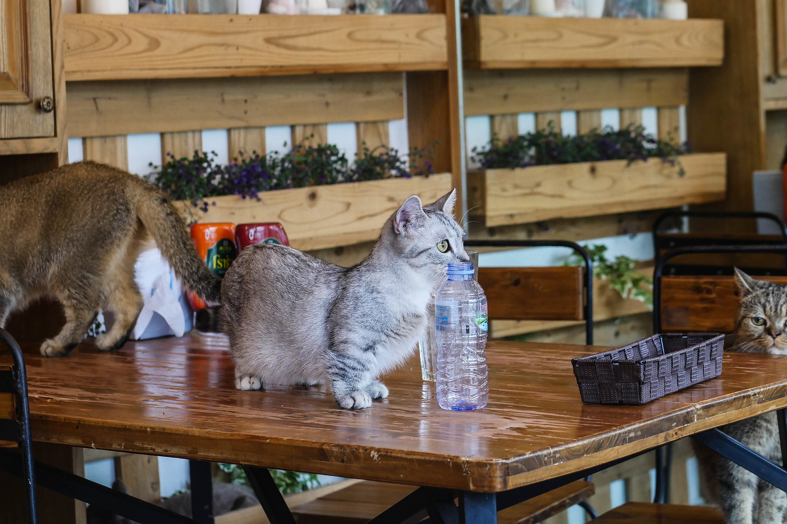 动物咖啡馆