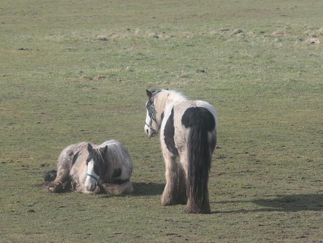 Ponies b chillin