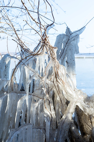 Twigs, branches and vines covered by a thick layer of ice