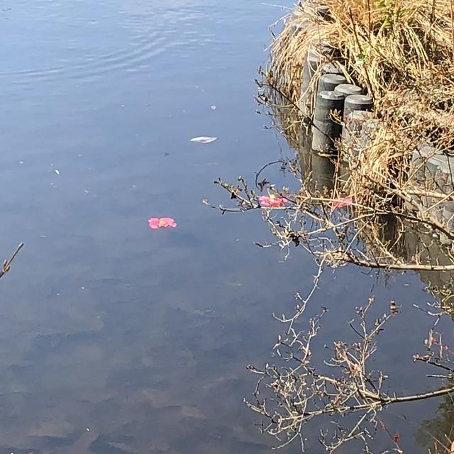 Flowers floating on water at Meiji shrine