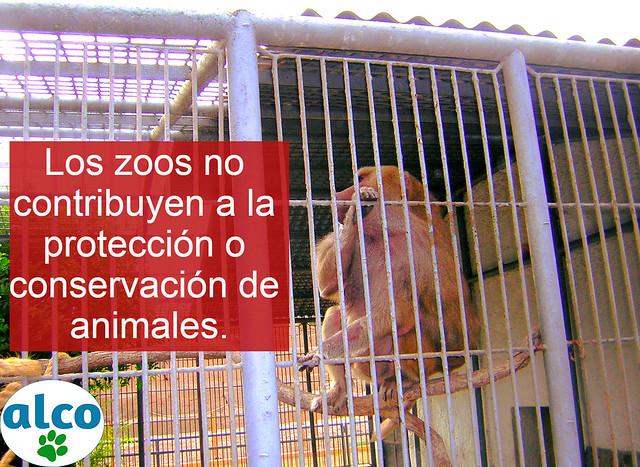 """Primate """"Papión"""" quien en su hábitat natural tendría una estructura social amplia y compleja."""