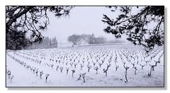 souvenirs d'hiver en Provence...4... - Photo of Le Pin