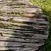 Log Texture - Wootton Park, Henley-In-Arden, Warwickshire. UK