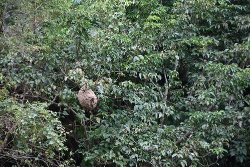 瓦拉米步道-山風瀑布-虎頭蜂窩