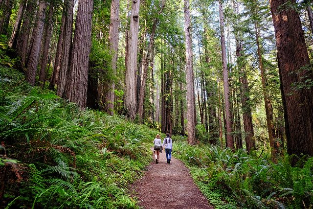 Walking through the Redwoods in California