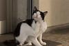 Photo:猫 / Cat By kimtetsu