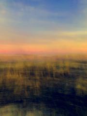 Beach Grass Glow: Sunset at Long Beach #2