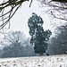 Wollaton Redwood and joggers in the snow