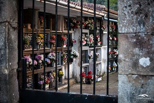 Cementerio Pando (Custom)