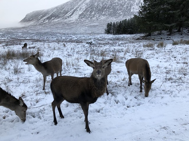 Highlands, Scotland 2018 22