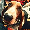 puppy02_mika
