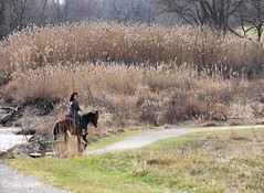 Horseback ride through Chagrin River Park