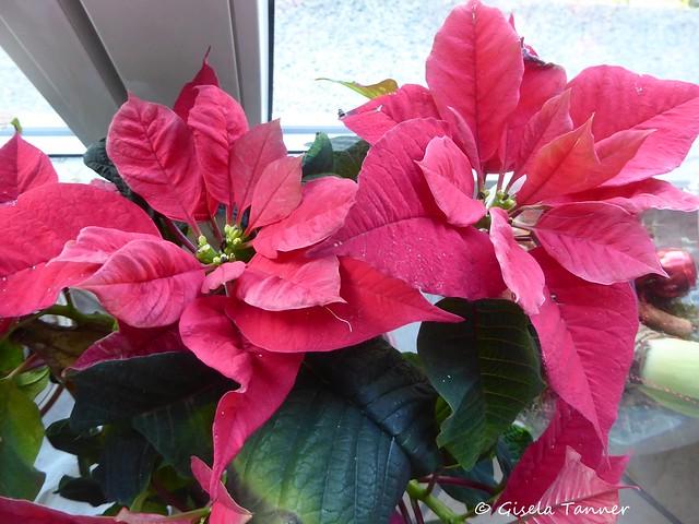 Winterlicher Grüße aus Haus und Garten