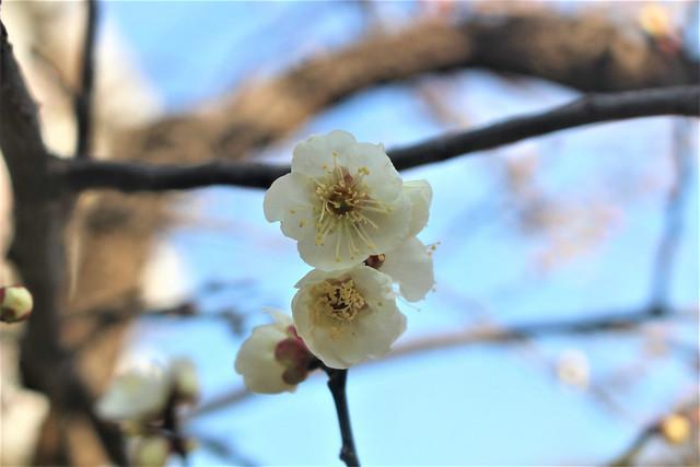 yushimatenjinume-gosyuin02013