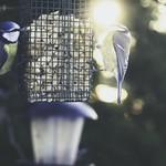 2018:02:13 16:20:24 - Schattenseite & Sonnenseite am Erdnuss Spender - Vogel Fotografie mit 45mm