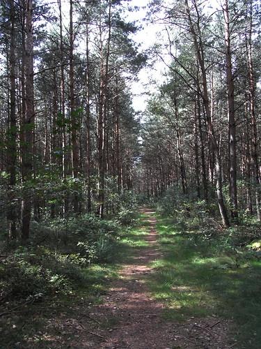 20100825 170 0105 Jakobus Wald Weg