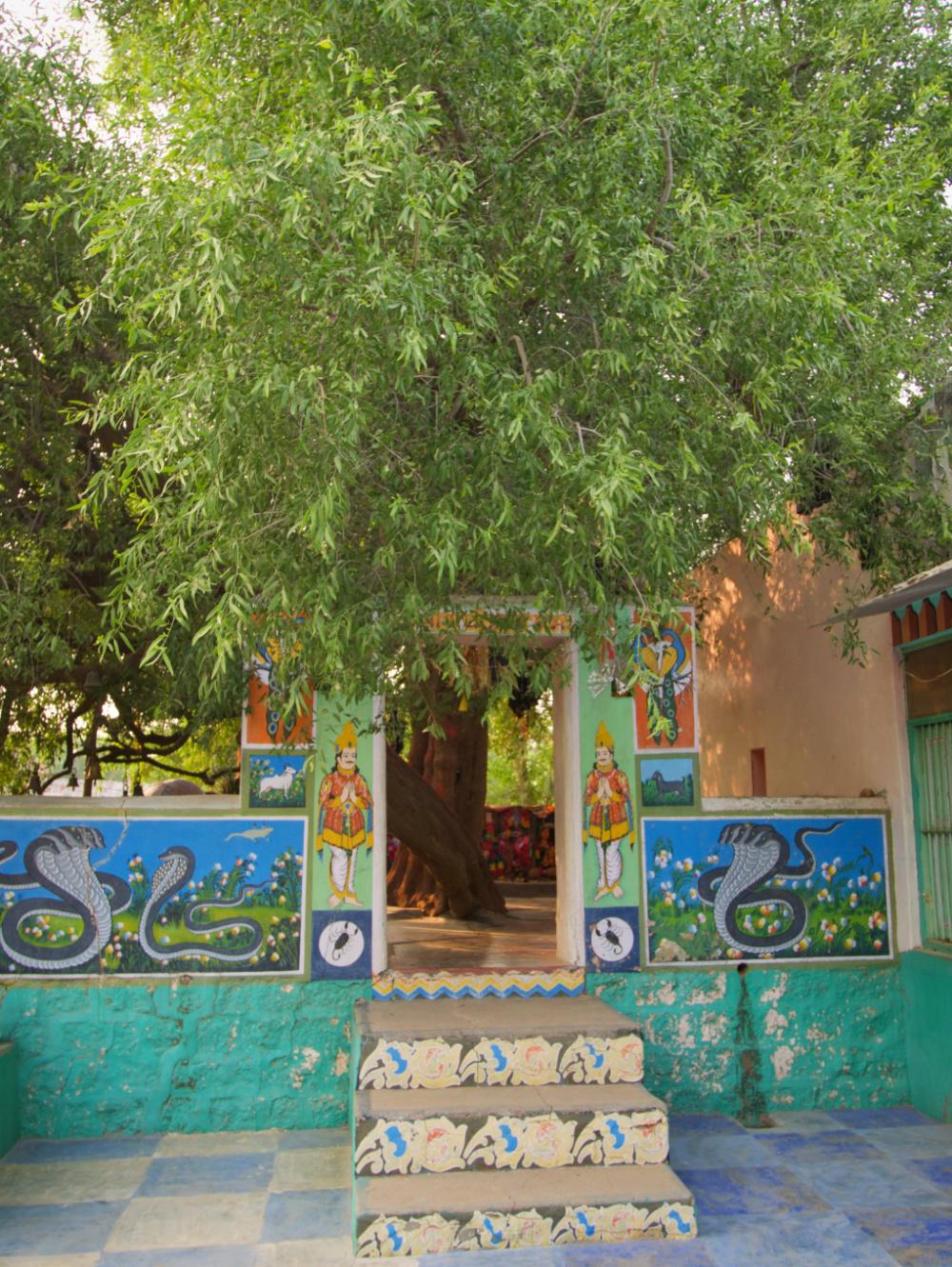 648-India-Bhenswara