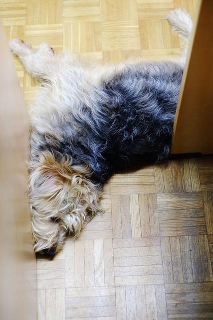 downward dog (6/52), Fujifilm X-T10, XF35mmF1.4 R