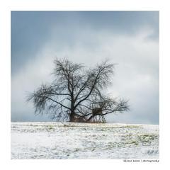 Alt wie ein Baum...
