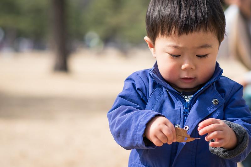 冬の皇居外苑で枯れ葉をつかむ子ども