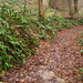 Holloway ferns