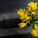 Bond Girly posted a photo:Such a gorgeous sunny day again.  Low inspiration so another Daff shot!