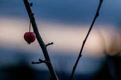 Apple Tree - Photo of Bourg-et-Comin