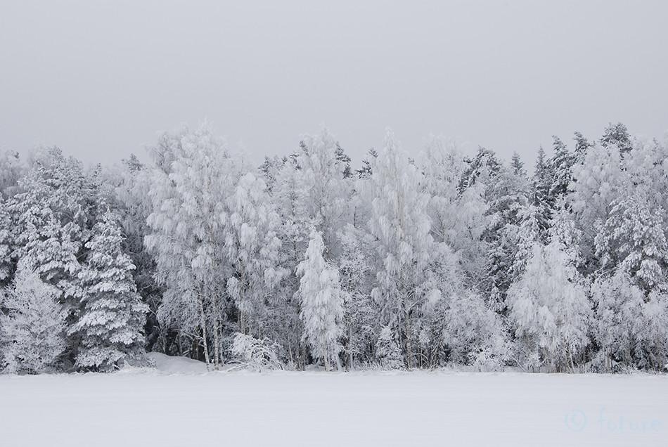 Frosty, forest, Talvine, maastik, Winter, landscape, Kaido Rummel, Estonia
