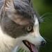 Doggie Cat