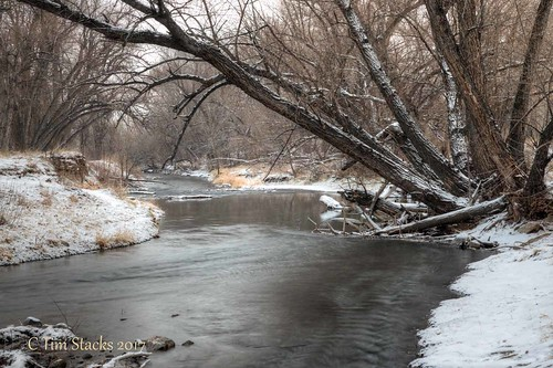 usa colorado lakewood bearcreekpark landscape waterway winter woods forest outdoors