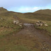 SWCP: The Rumps