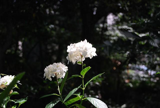 DSC_8246