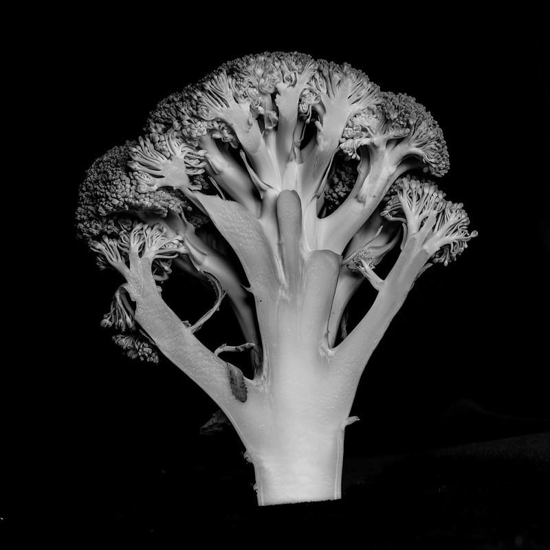 &quot;Brócoli&quot; - Carlos Alonso <br />&#40;Cadchapela&#41;