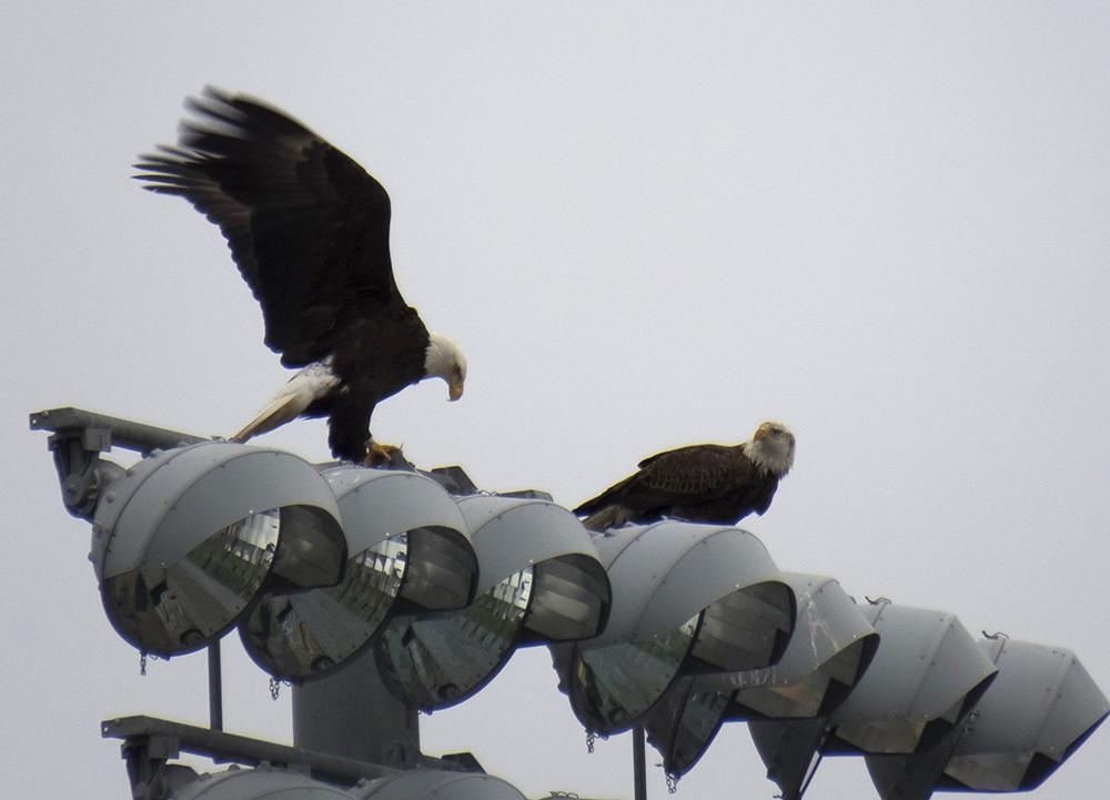 Asbury Eagles