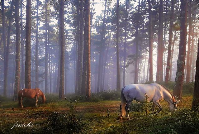 vizcaya niebla con caballos d