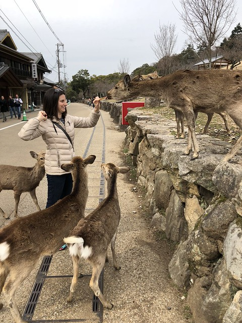 Feeding even more deer in Nara