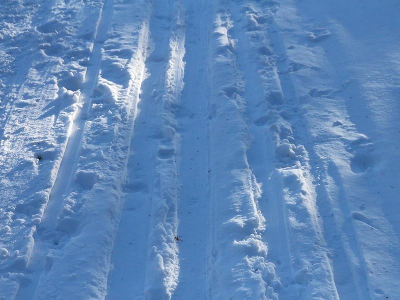 IMG_7690 Tower Fall Ski Trail