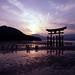 Colours of Nature, Miyajima