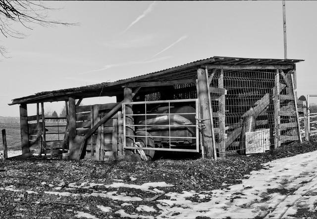 Farm 1, Nikon D7200, Nikkor 500mm f/4 P ED IF