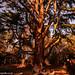Redwood (1 of 1)